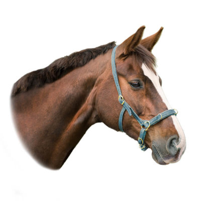 Bridle / Equipment